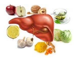 liver is the largest organ of the body